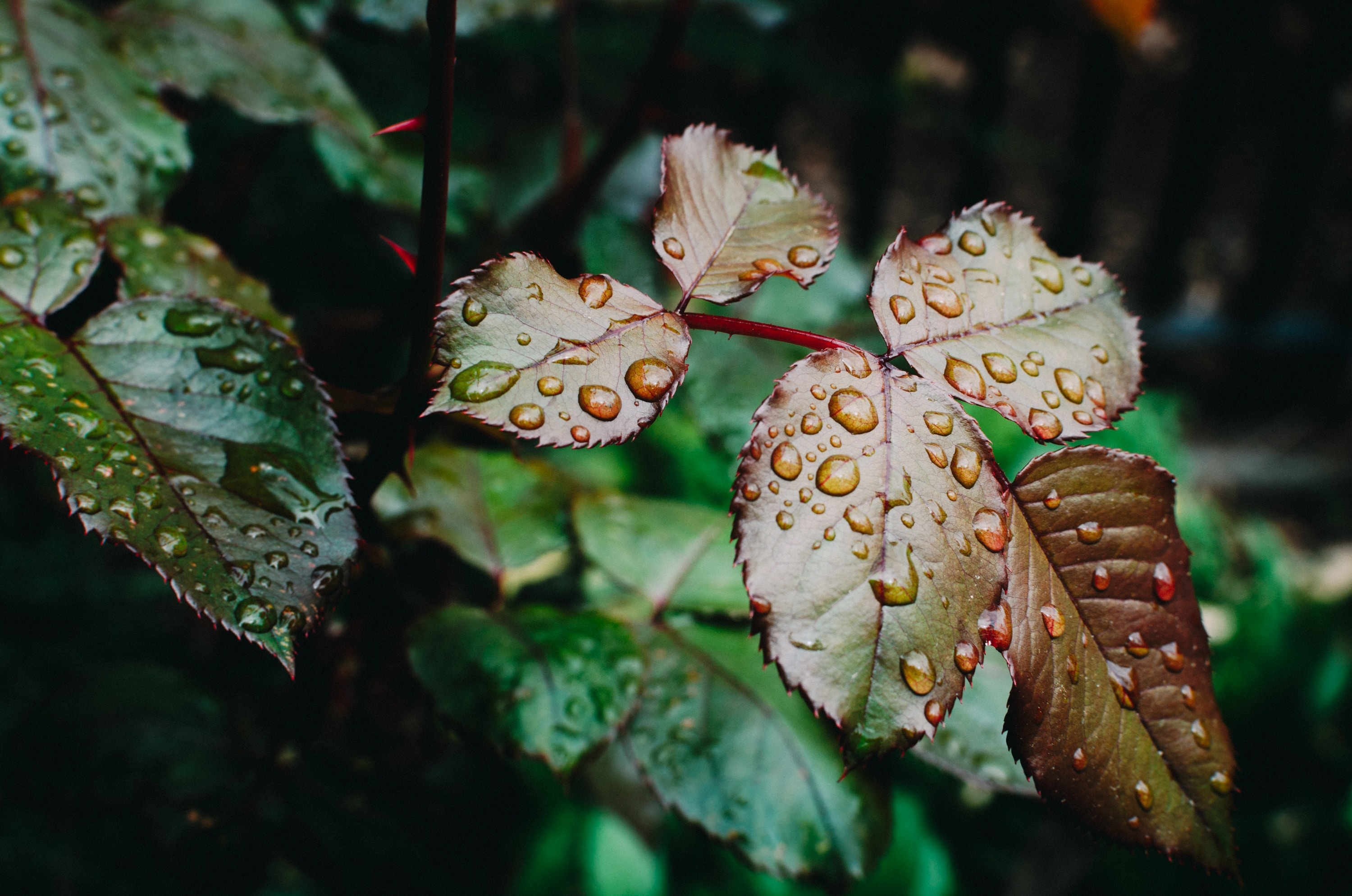 How RAIN might help us to calm down